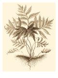 Sepia Munting Foliage IV Poster von Abraham Munting