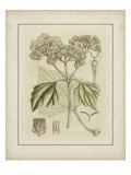 Tinted Botanical IV Giclee Print by Samuel Curtis