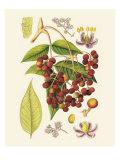 Crimson Berries IV Art by Samuel Curtis