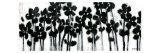 Black Flowers on White II Prints by Norman Wyatt Jr.
