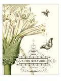 Jardin Botanique II Giclee Print by  Vision Studio