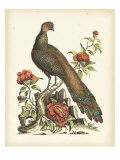 Regal Pheasants III Giclee Print by George Edwards