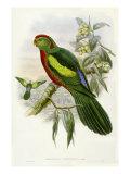 Gould Parrots II Giclee-tryk i høj kvalitet af John Gould
