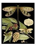 Whimsical Dragonfly on Black I Poster von  Vision Studio