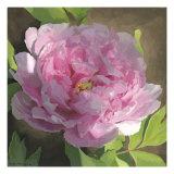 Peony in Pink II Giclée-Premiumdruck von Megan Meagher