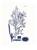 Shades of Indigo I Giclee Print by Vision Studio 