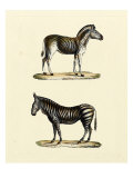 Animal Studies I Giclee Print by Vision Studio 