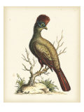 Regal Pheasants IV Affiches par George Edwards