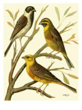 Domestic Bird Family I Posters by W. Rutledge