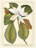 Magnificent Magnolias II Poster von Jacob Trew