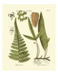Antique Fern IV Posters