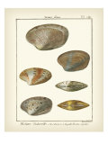 Venus Shells, Pl.281 Posters par Denis Diderot