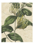 Botanic Beauty IV Giclee Print by Vision Studio 