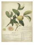 Descube Botanical I Poster von A. Descube