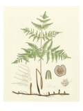 Eaton Ferns III Posters par Daniel C. Eaton