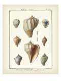 Volute Shells, Pl.384 Affiches par Denis Diderot