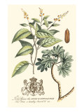 Imperial Foliage IV Posters