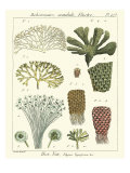Coral Classification I Giclee Print by Vision Studio 