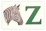 Z, Zebra Photo