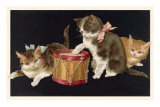 Kittens with Drum Photo