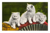 Three Kittens with Fan Posters