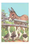 Burro Talking to Geese Poster