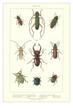 Various Kinds of Beetles Kunstdrucke