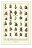 Lots of Beetles Poster