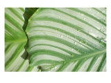 Tropical Leaf 4 Giclee Print by  Porter Design