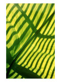 Tropical Leaf 2 Giclee Print by  Porter Design