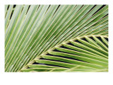 Tropical Leaf 9 Giclee Print by  Porter Design