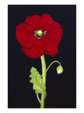Red Poppy Giclee Print by Soraya Chemaly
