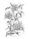 Imperial Gloriosa Giclee Print by  Porter Design