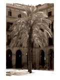 Palm Barcelona Giclee Print by  Porter Design