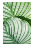 Tropical Leaf 5 Giclee Print by  Porter Design