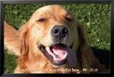 Joyful Doggie Print