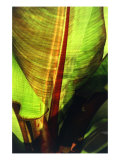 Tropical Leaf 3 Giclee Print by  Porter Design