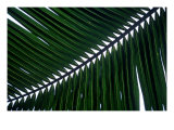 Tropical Leaf 1 Giclee Print by  Porter Design