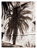 Antibes Palm Giclee Print by  Porter Design