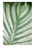 Tropical Leaf 6 Giclee Print by  Porter Design