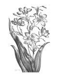 Tyger Ixia Prints by  Porter Design