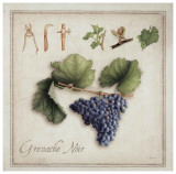 Grenache Noir Prints by Vincent Perriol