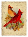 Cardinal Giclee Print by Kate Ward Thacker
