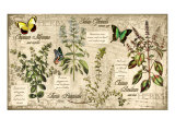 Herbs Giclee Print by Kate Ward Thacker