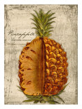 Pineapple Reproduction procédé giclée par Kate Ward Thacker