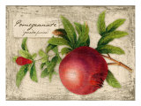 Pomegranate Giclee Print by Kate Ward Thacker