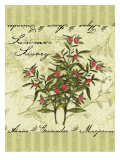 Summer Savory Giclee Print by Kate Ward Thacker
