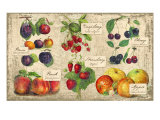 Gourmet Fruit Giclee Print by Kate Ward Thacker