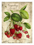 Raspberry Giclee Print by Kate Ward Thacker