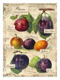 Plum Giclee Print by Kate Ward Thacker